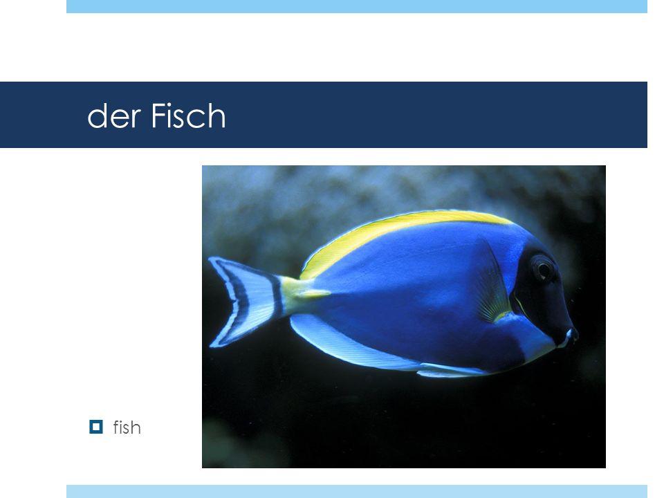 der Fisch fish