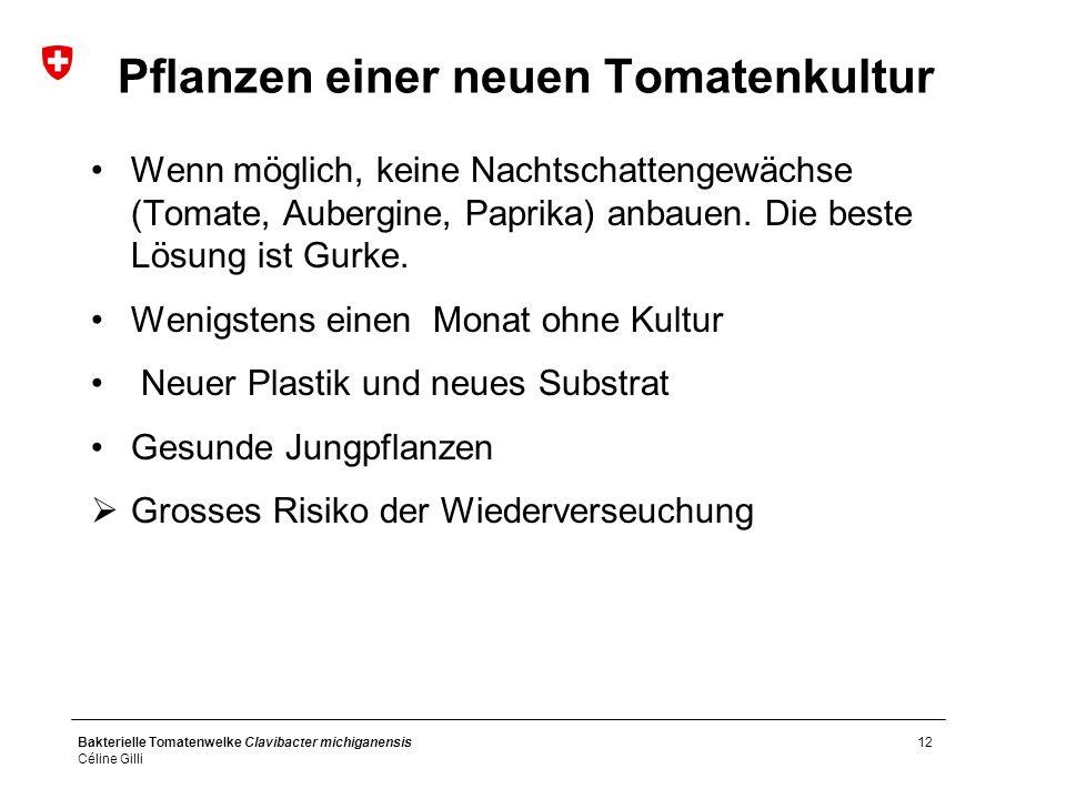 Bakterielle Tomatenwelke Clavibacter michiganensis Céline Gilli 12 Pflanzen einer neuen Tomatenkultur Wenn möglich, keine Nachtschattengewächse (Tomate, Aubergine, Paprika) anbauen.