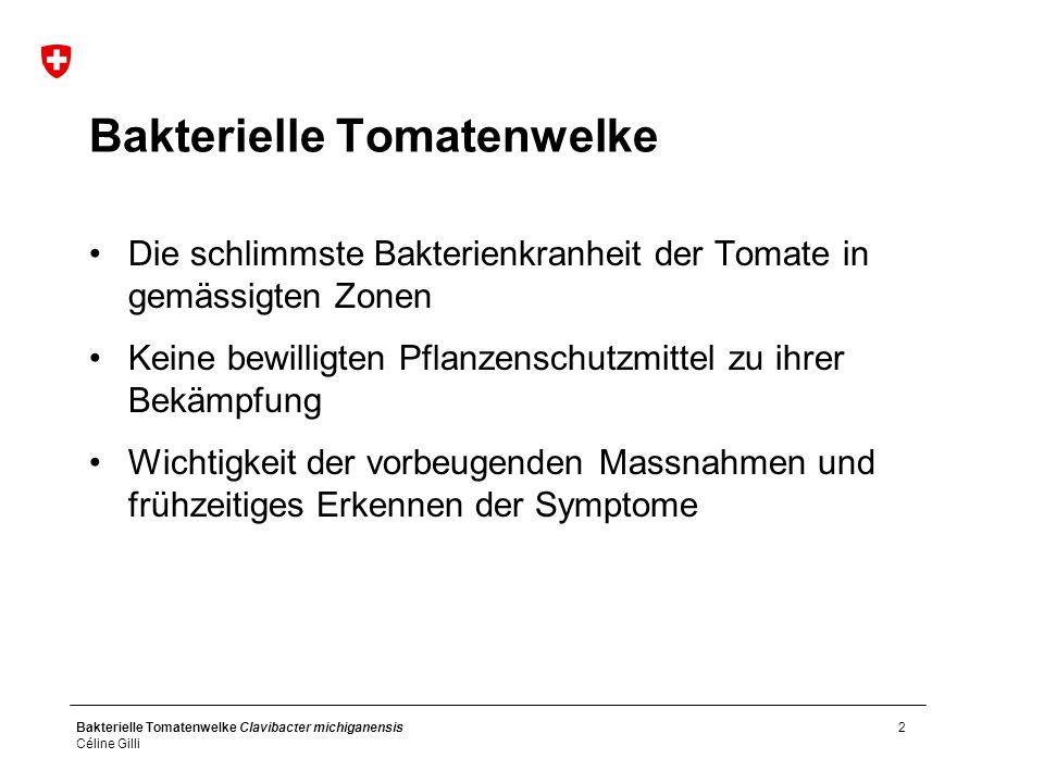 Bakterielle Tomatenwelke Clavibacter michiganensis Céline Gilli 2 Bakterielle Tomatenwelke Die schlimmste Bakterienkranheit der Tomate in gemässigten Zonen Keine bewilligten Pflanzenschutzmittel zu ihrer Bekämpfung Wichtigkeit der vorbeugenden Massnahmen und frühzeitiges Erkennen der Symptome