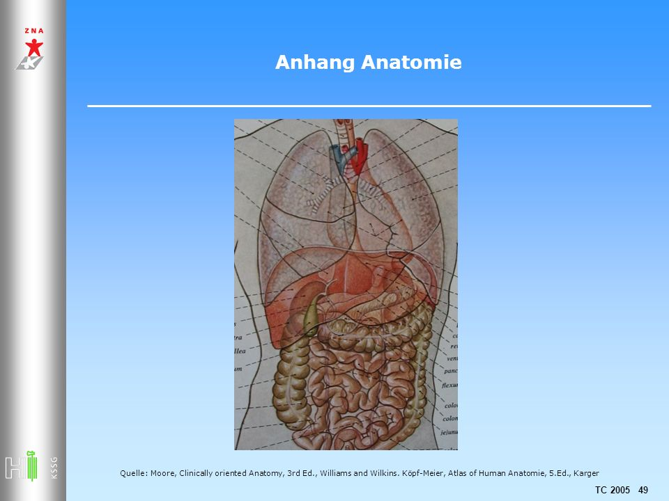 TC 2005 49 Anhang Anatomie Quelle: Moore, Clinically oriented Anatomy, 3rd Ed., Williams and Wilkins.