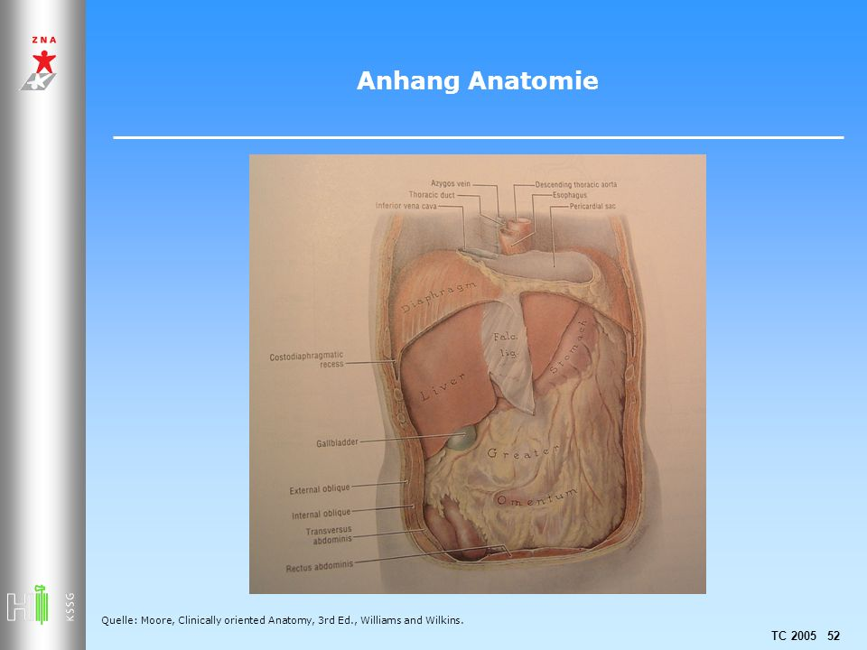 TC 2005 52 Anhang Anatomie Quelle: Moore, Clinically oriented Anatomy, 3rd Ed., Williams and Wilkins.