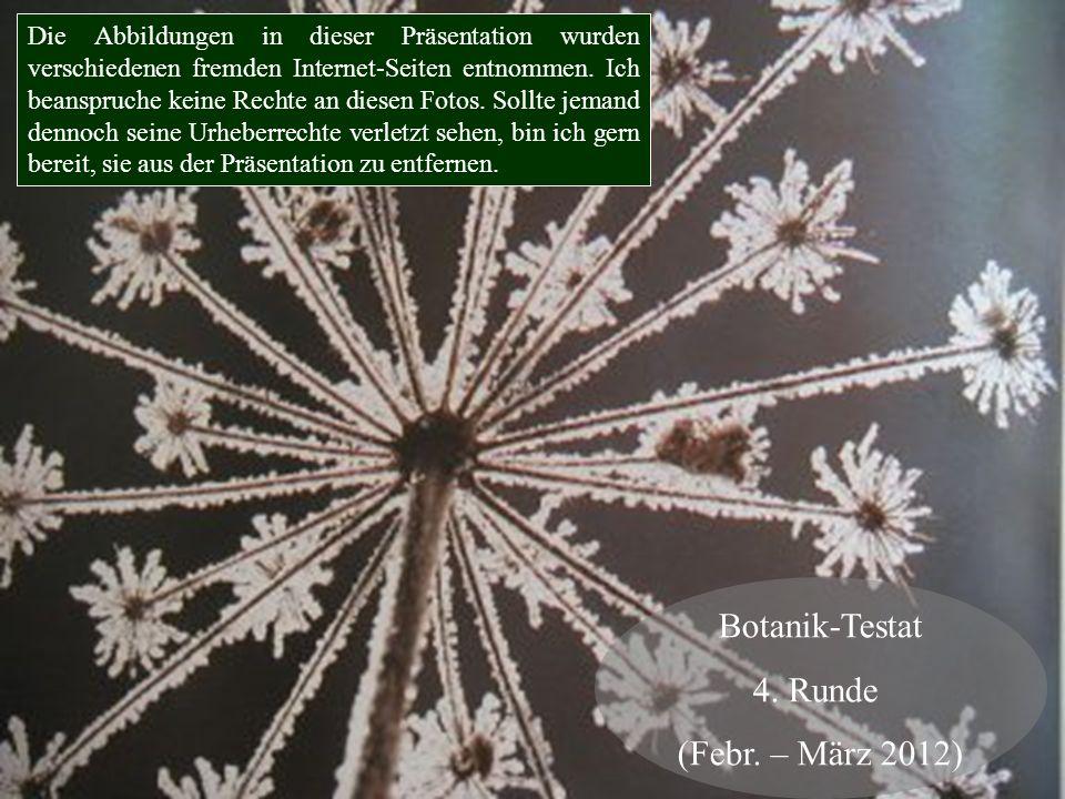 Botanik-Testat 4. Runde (Febr. – März 2012) Die Abbildungen in dieser Präsentation wurden verschiedenen fremden Internet-Seiten entnommen. Ich beanspr