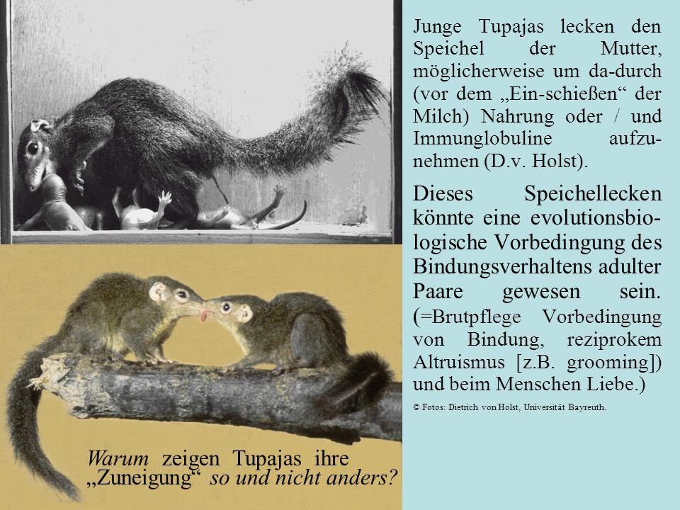 Junge Tupajas lecken den Speichel der Mutter, möglicherweise um da-durch (vor dem Ein-schießen der Milch) Nahrung oder / und Immunglobuline aufzu- nehmen (D.v.