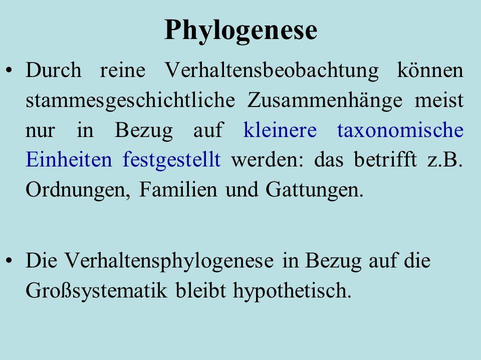 Phylogenese Durch reine Verhaltensbeobachtung können stammesgeschichtliche Zusammenhänge meist nur in Bezug auf kleinere taxonomische Einheiten festgestellt werden: das betrifft z.B.