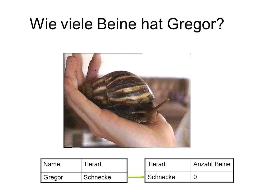 Wie viele Beine hat Gregor? NameTierart GregorSchnecke TierartAnzahl Beine Schnecke0