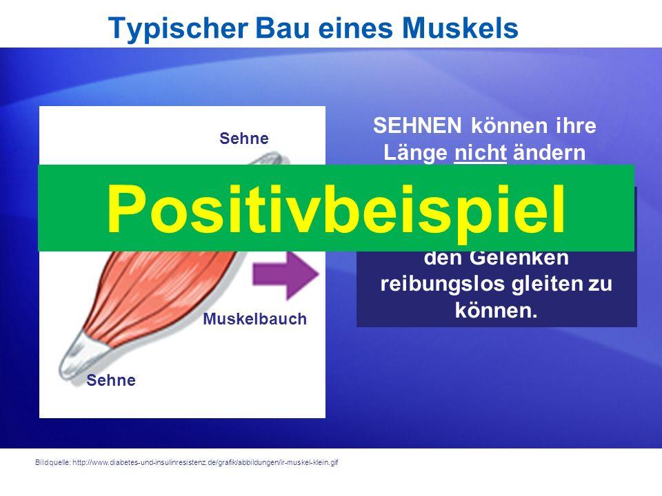 Hinweise und Informationen für neue Fünftklässler am Humboldt-Gymnasium Trier Am 15. und 16. November 2011 finden die Informationsabende für interessi