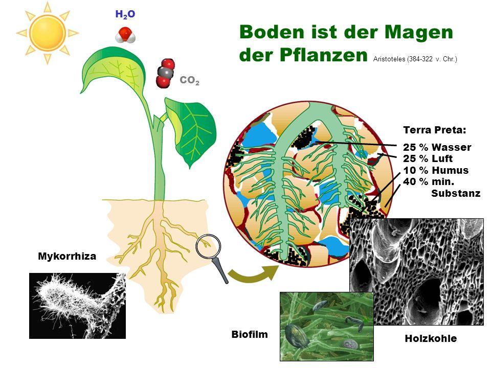Terra Preta: 25 % Wasser 25 % Luft 10 % Humus 40 % min. Substanz CO 2 H2OH2O Holzkohle Biofilm Mykorrhiza Boden ist der Magen der Pflanzen Aristoteles