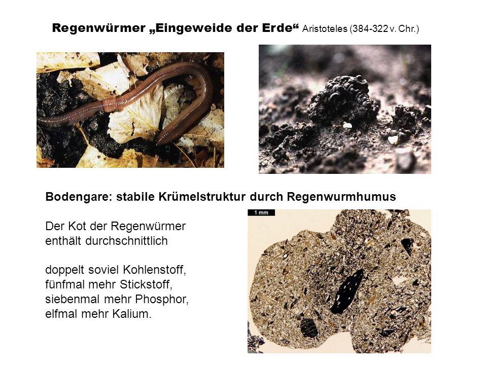 Bodengare: stabile Krümelstruktur durch Regenwurmhumus Der Kot der Regenwürmer enthält durchschnittlich doppelt soviel Kohlenstoff, fünfmal mehr Stick