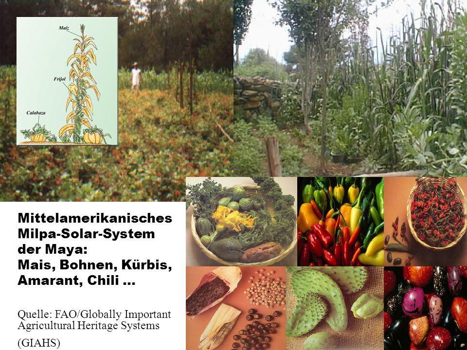 Mittelamerikanisches Milpa-Solar-System der Maya: Mais, Bohnen, Kürbis, Amarant, Chili … Quelle: FAO/Globally Important Agricultural Heritage Systems