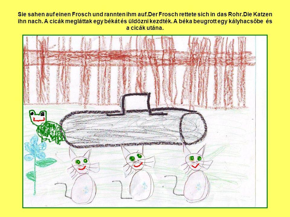 Sie sahen auf einen Frosch und rannten ihm auf.Der Frosch rettete sich in das Rohr.Die Katzen ihn nach. A cicák megláttak egy békát és üldözni kezdték
