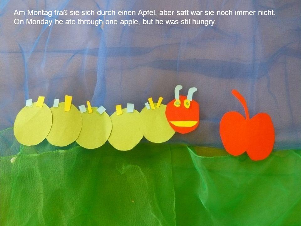 Am Montag fraß sie sich durch einen Apfel, aber satt war sie noch immer nicht. On Monday he ate through one apple, but he was stil hungry.