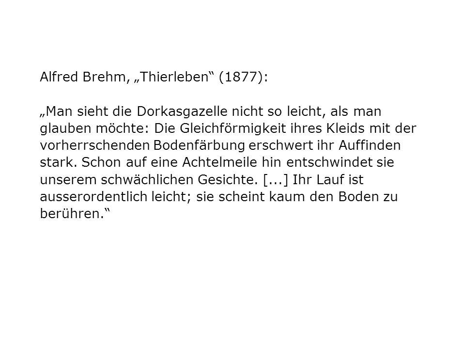 Alfred Brehm, Thierleben (1877): Man sieht die Dorkasgazelle nicht so leicht, als man glauben möchte: Die Gleichförmigkeit ihres Kleids mit der vorherrschenden Bodenfärbung erschwert ihr Auffinden stark.