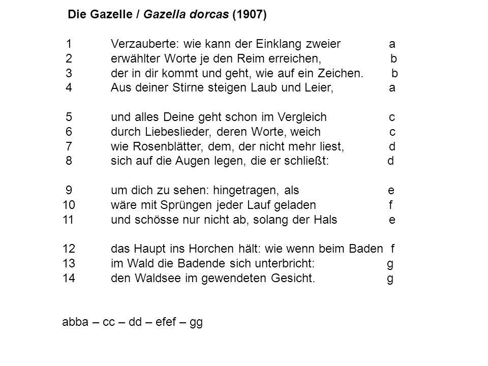 Die Gazelle / Gazella dorcas (1907) 1Verzauberte: wie kann der Einklang zweier a 2erwählter Worte je den Reim erreichen, b 3der in dir kommt und geht, wie auf ein Zeichen.