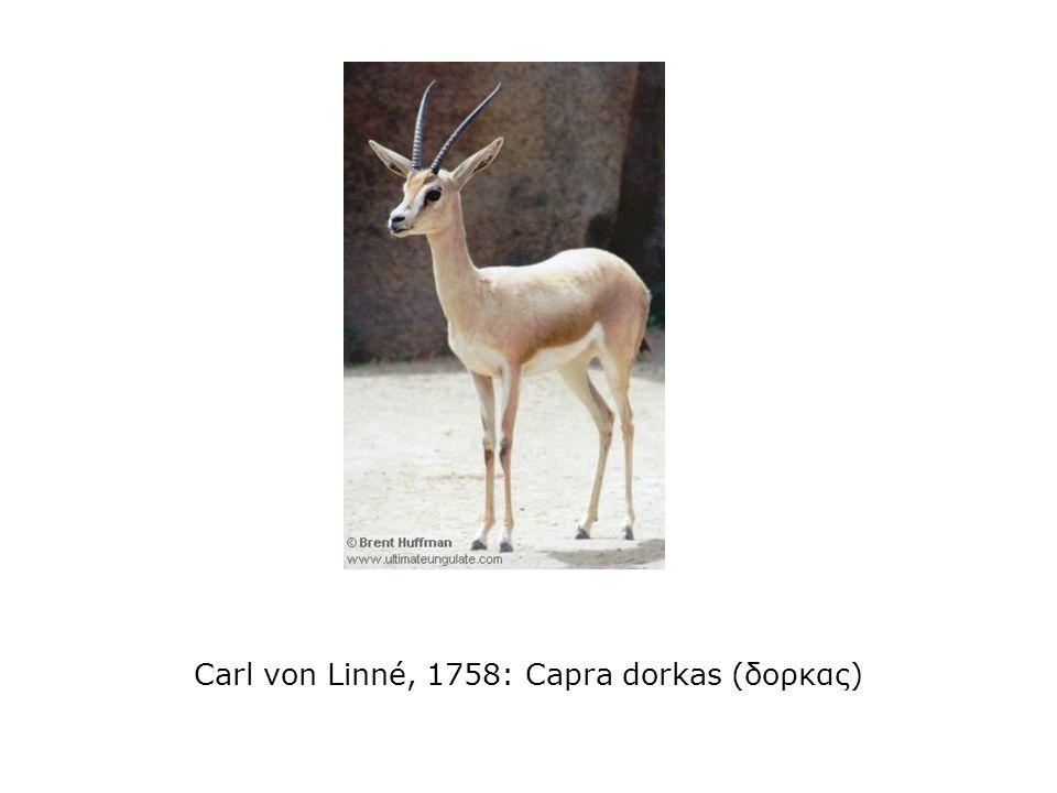 Carl von Linné, 1758: Capra dorkas (δορκας)