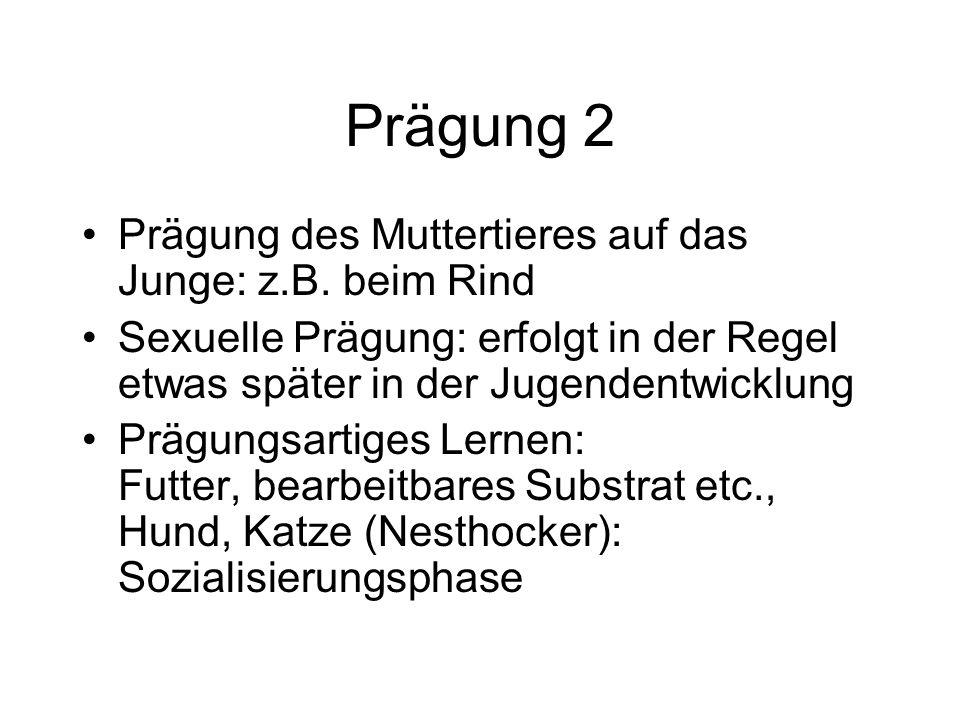 Prägung 2 Prägung des Muttertieres auf das Junge: z.B. beim Rind Sexuelle Prägung: erfolgt in der Regel etwas später in der Jugendentwicklung Prägungs