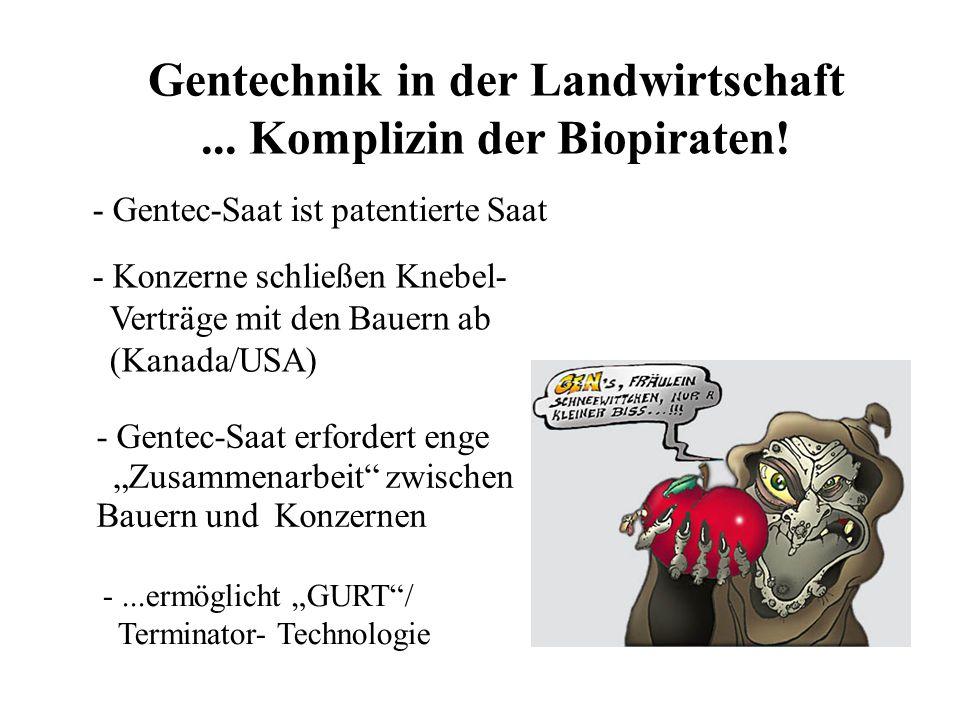 Gentechnik in der Landwirtschaft... Komplizin der Biopiraten.