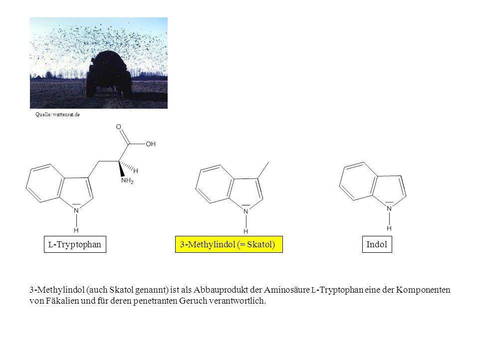 Quelle: wattenrat.de Indol3-Methylindol (= Skatol) 3-Methylindol (auch Skatol genannt) ist als Abbauprodukt der Aminosäure L -Tryptophan eine der Komp