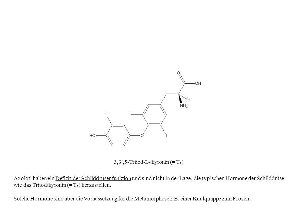 3,3 ',5-Triiod- L -thyronin (= T 3 ) Axolotl haben ein Defizit der Schilddrüsenfunktion und sind nicht in der Lage, die typischen Hormone der Schilddr