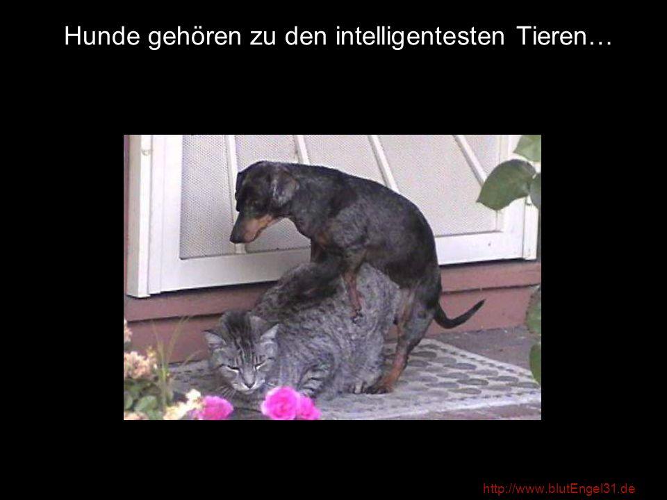 http://www.blutEngel31.de …und Programmierer zu den intelligentesten Menschen!