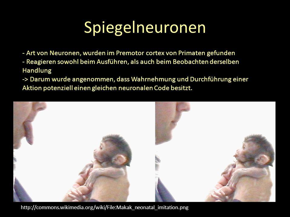 Spiegelneuronen http://commons.wikimedia.org/wiki/File:Makak_neonatal_imitation.png - Art von Neuronen, wurden im Premotor cortex von Primaten gefunden - Reagieren sowohl beim Ausführen, als auch beim Beobachten derselben Handlung -> Darum wurde angenommen, dass Wahrnehmung und Durchführung einer Aktion potenziell einen gleichen neuronalen Code besitzt.
