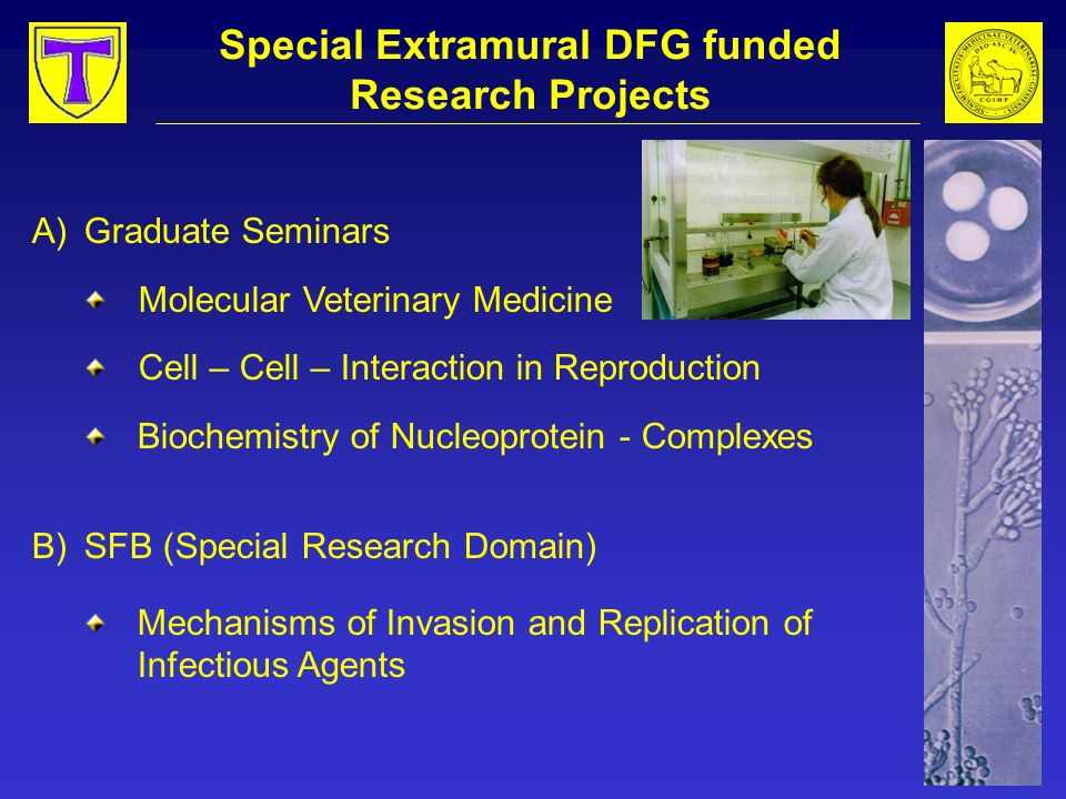 Special Extramural DFG funded Research Projects A)Graduate Seminars Molecular Veterinary Medicine Cell – Cell – Interaction in Reproduction Biochemist