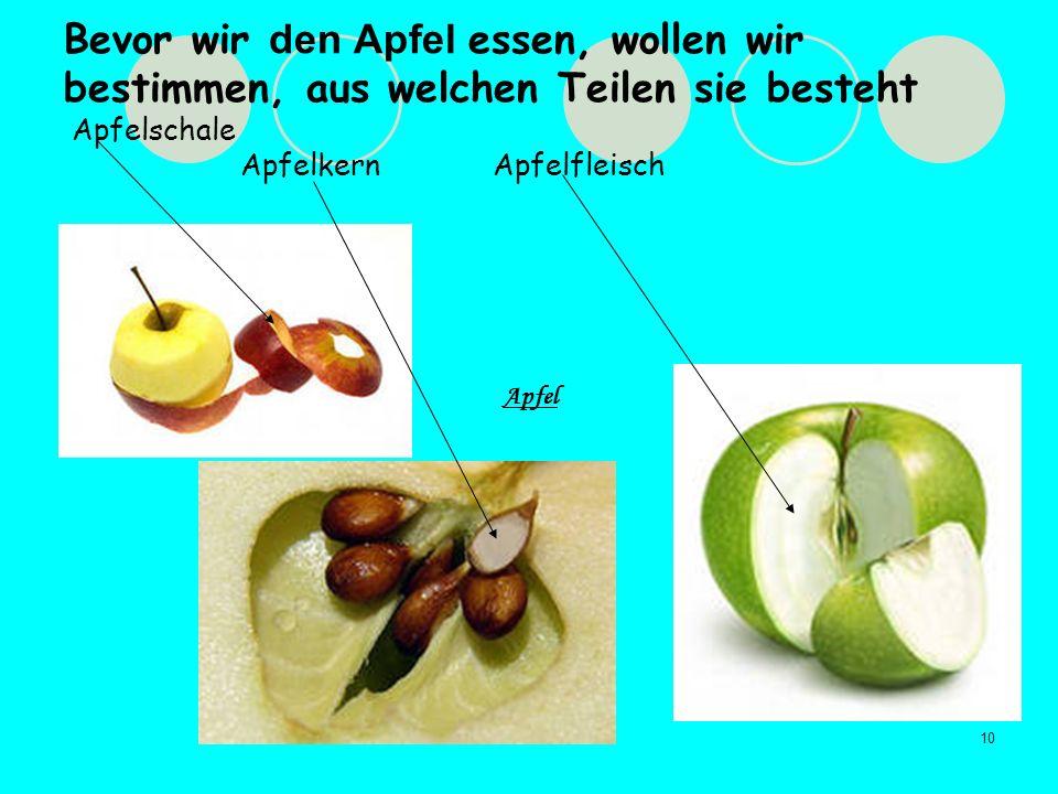 10 Bevor wir den Apfel essen, wollen wir bestimmen, aus welchen Teilen sie besteht Apfelschale Apfelkern Apfelfleisch Apfel