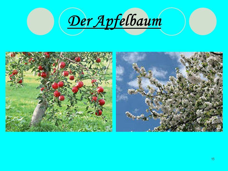 15 Der Apfelbaum