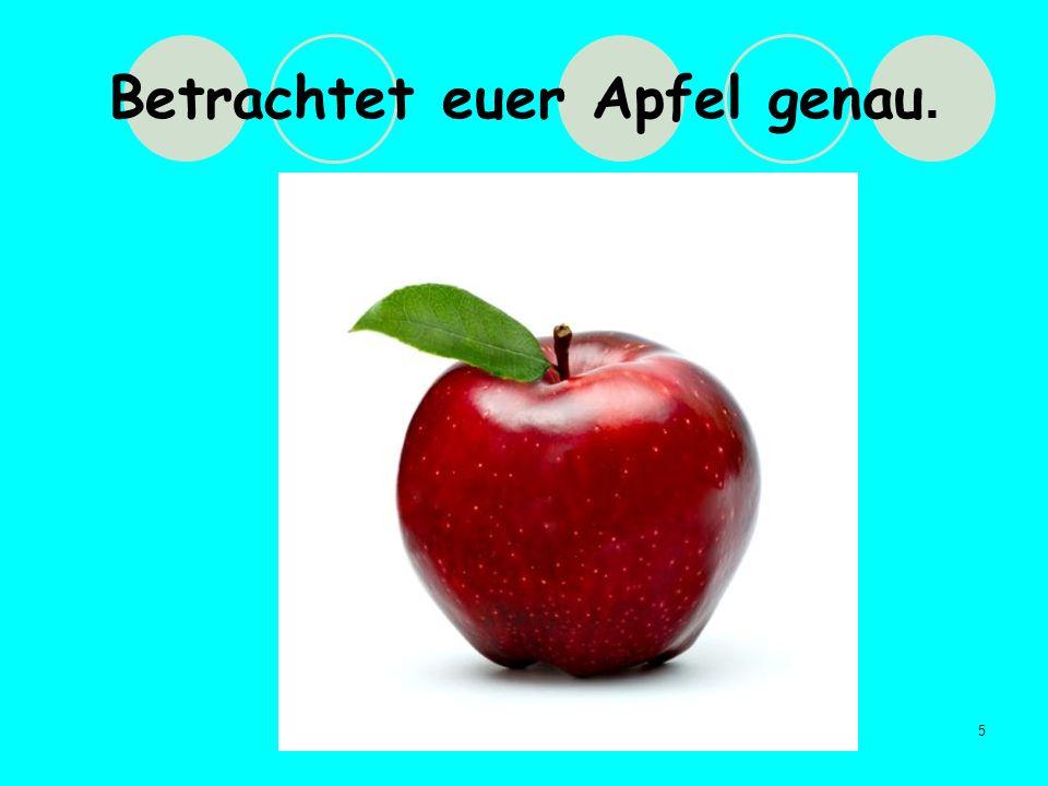 5 Betrachtet euer Apfel genau.