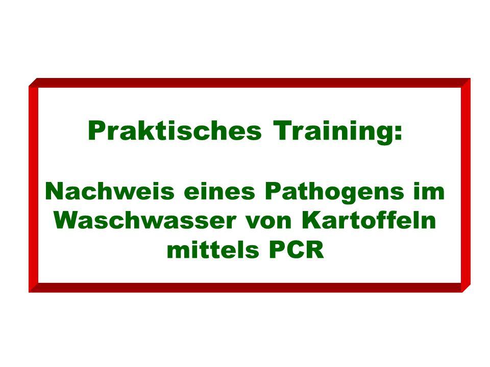 Praktisches Training: Nachweis eines Pathogens im Waschwasser von Kartoffeln mittels PCR