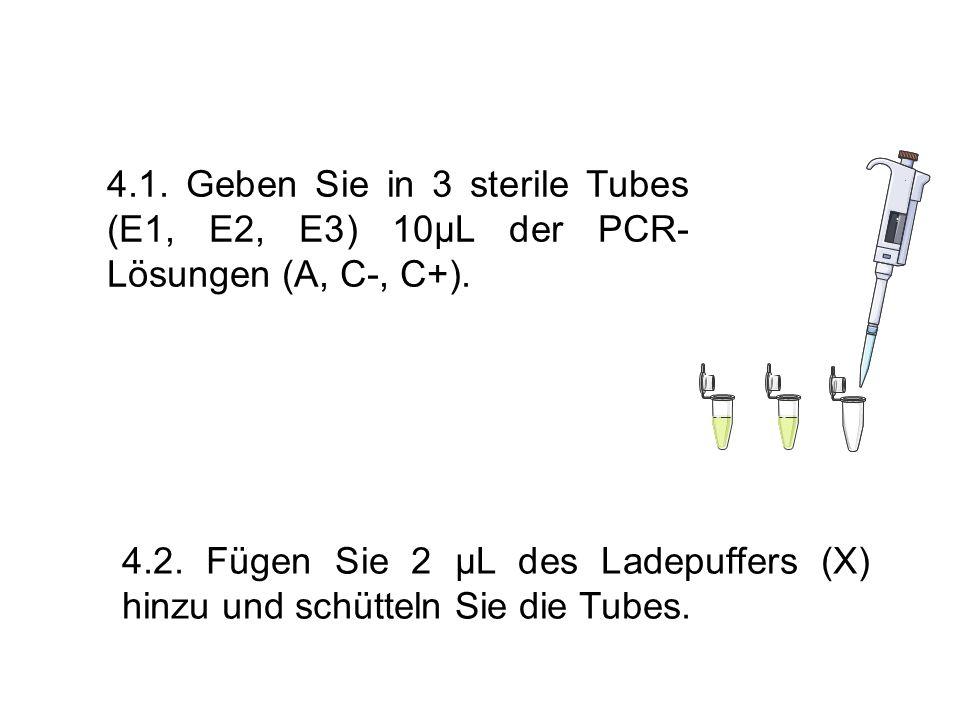 4.1. Geben Sie in 3 sterile Tubes (E1, E2, E3) 10µL der PCR- Lösungen (A, C-, C+). 4.2. Fügen Sie 2 µL des Ladepuffers (X) hinzu und schütteln Sie die