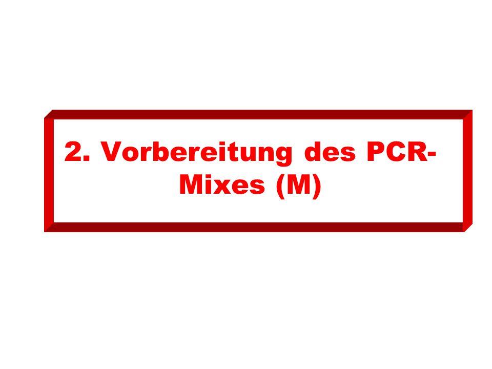 2. Vorbereitung des PCR- Mixes (M)