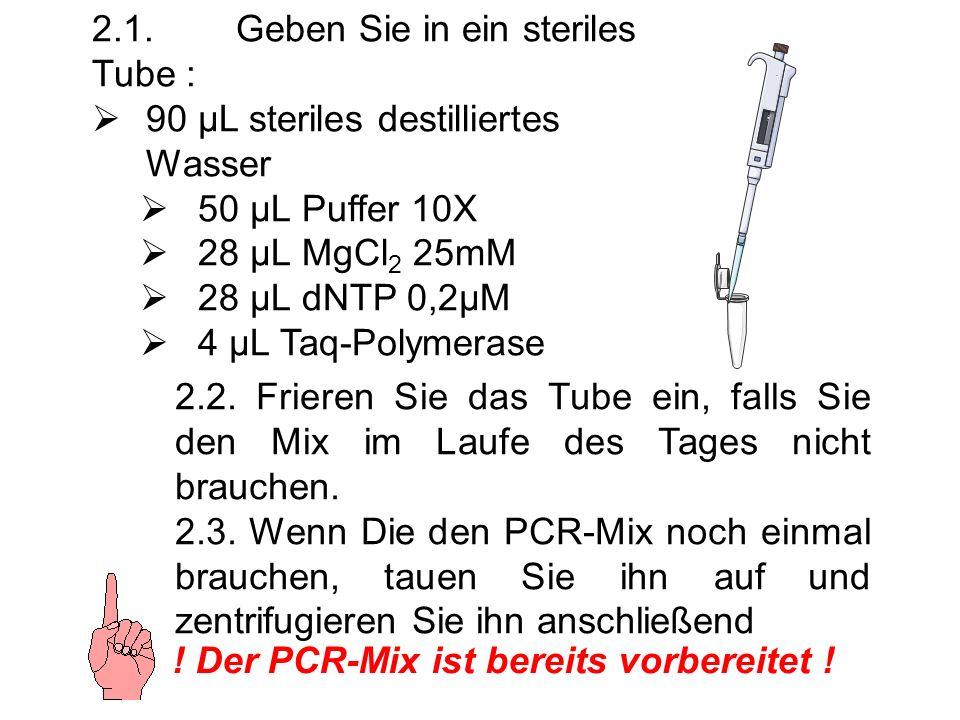 2.1.Geben Sie in ein steriles Tube : 90 µL steriles destilliertes Wasser 50 µL Puffer 10X 28 µL MgCl 2 25mM 28 µL dNTP 0,2µM 4 µL Taq-Polymerase 2.2.