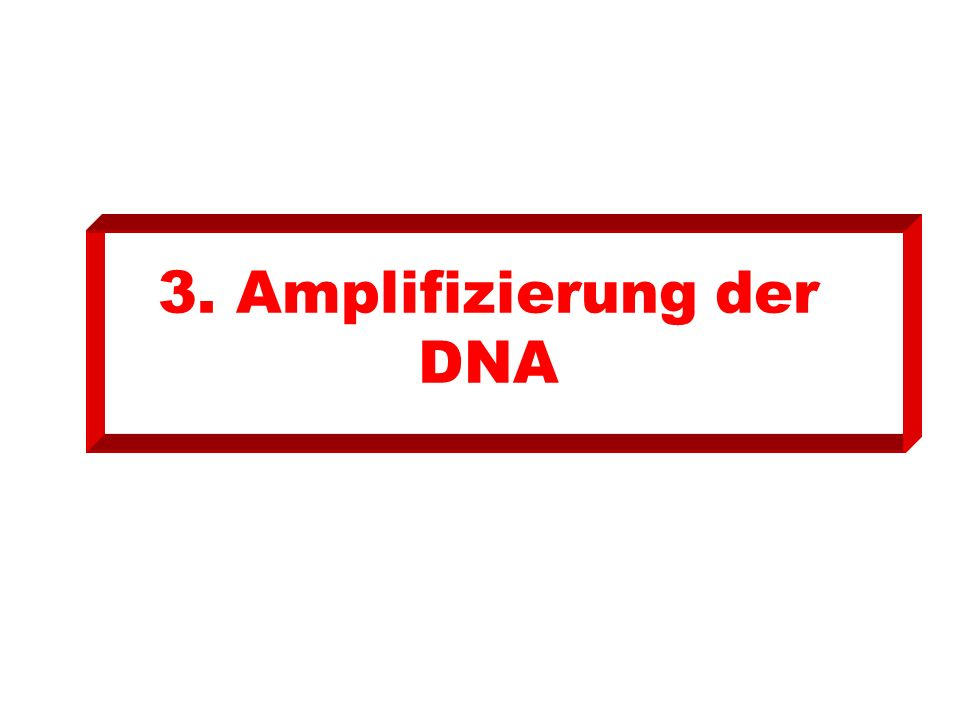 3. Amplifizierung der DNA