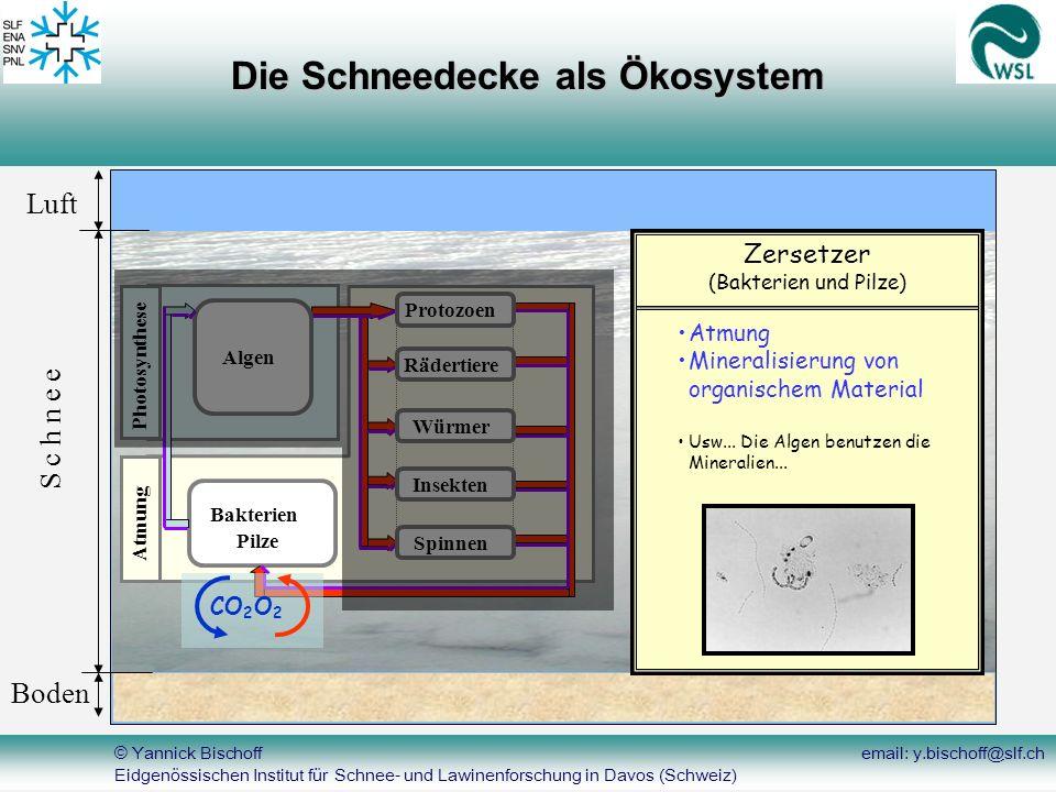 © Yannick Bischoff email: y.bischoff@slf.ch Eidgenössischen Institut für Schnee- und Lawinenforschung in Davos (Schweiz) Luft Boden S c h n e e Bakter