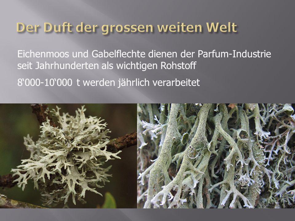 Eichenmoos und Gabelflechte dienen der Parfum-Industrie seit Jahrhunderten als wichtigen Rohstoff 8000-10000 t werden jährlich verarbeitet