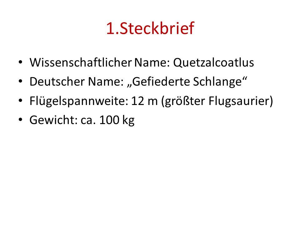 1.Steckbrief Wissenschaftlicher Name: Quetzalcoatlus Deutscher Name: Gefiederte Schlange Flügelspannweite: 12 m (größter Flugsaurier) Gewicht: ca. 100