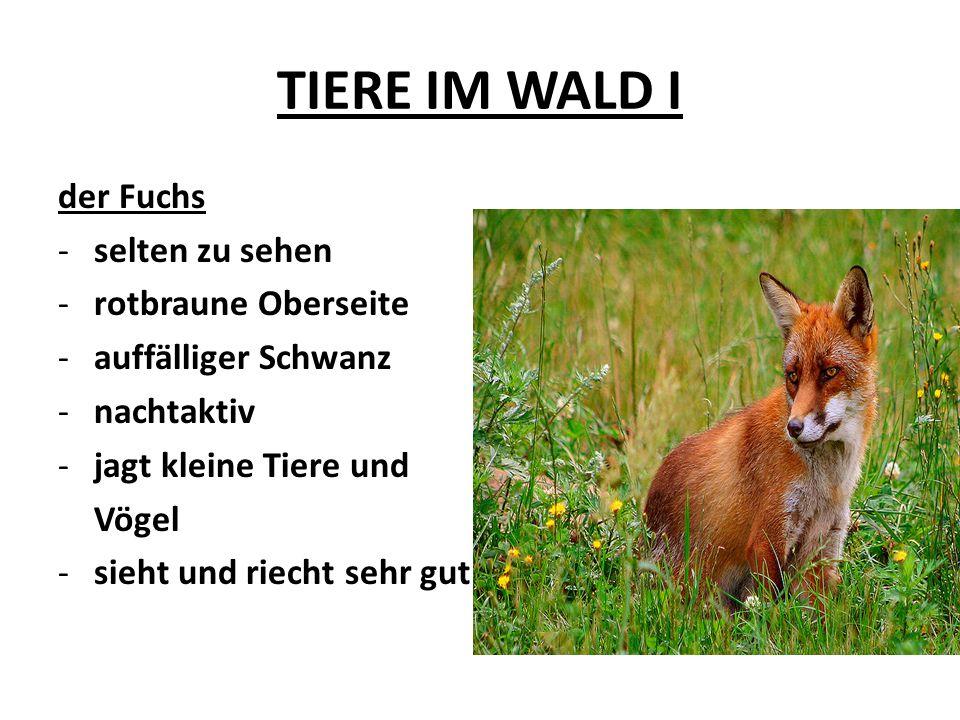 TIERE IM WALD I der Fuchs -selten zu sehen -rotbraune Oberseite -auffälliger Schwanz -nachtaktiv -jagt kleine Tiere und Vögel -sieht und riecht sehr g