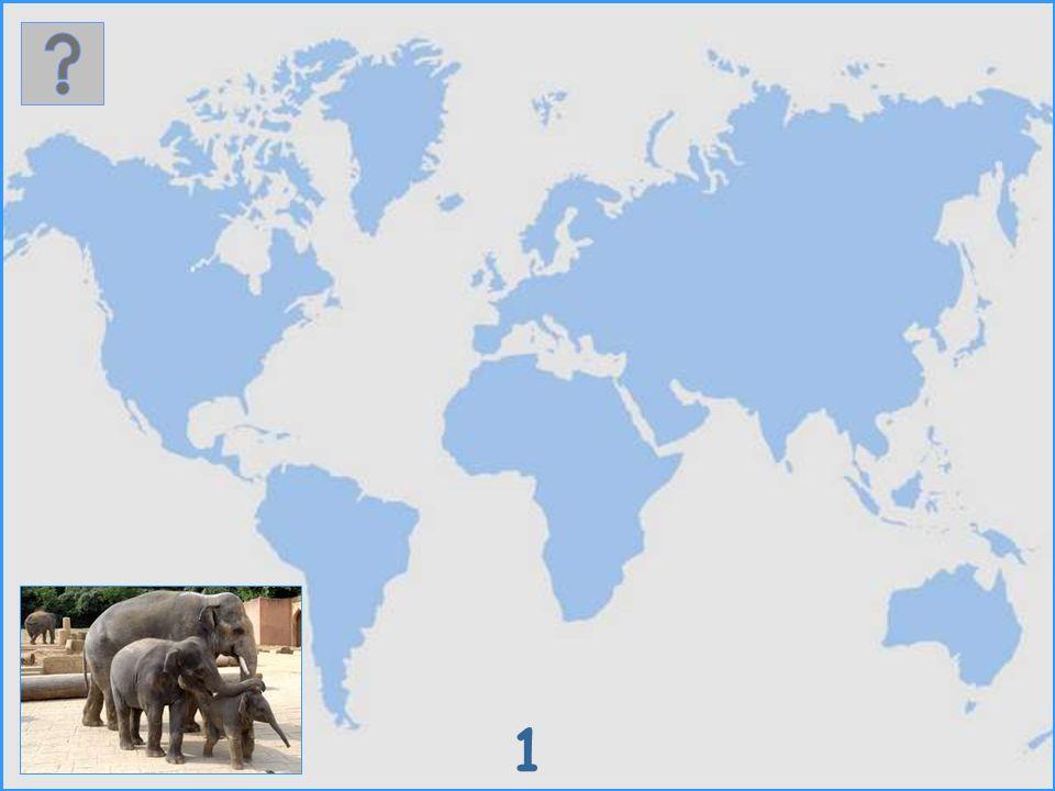 Wo leben diese Säugetiere? Es werden 30 verschiedene Säugetierarten als Bild vorgestellt. Wenn du auf der Weltkarte ihren natürlichen Lebensraum ankli