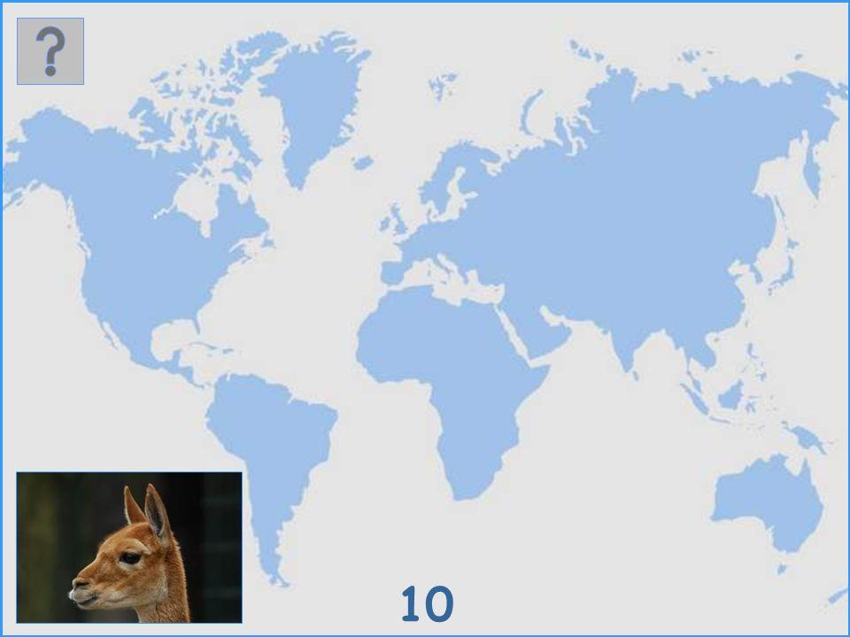 9 Mendesantilope