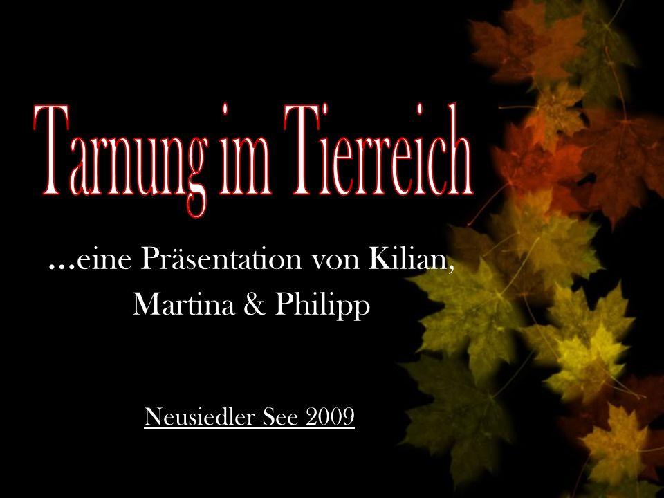 … eine Präsentation von Kilian, Martina & Philipp Neusiedler See 2009