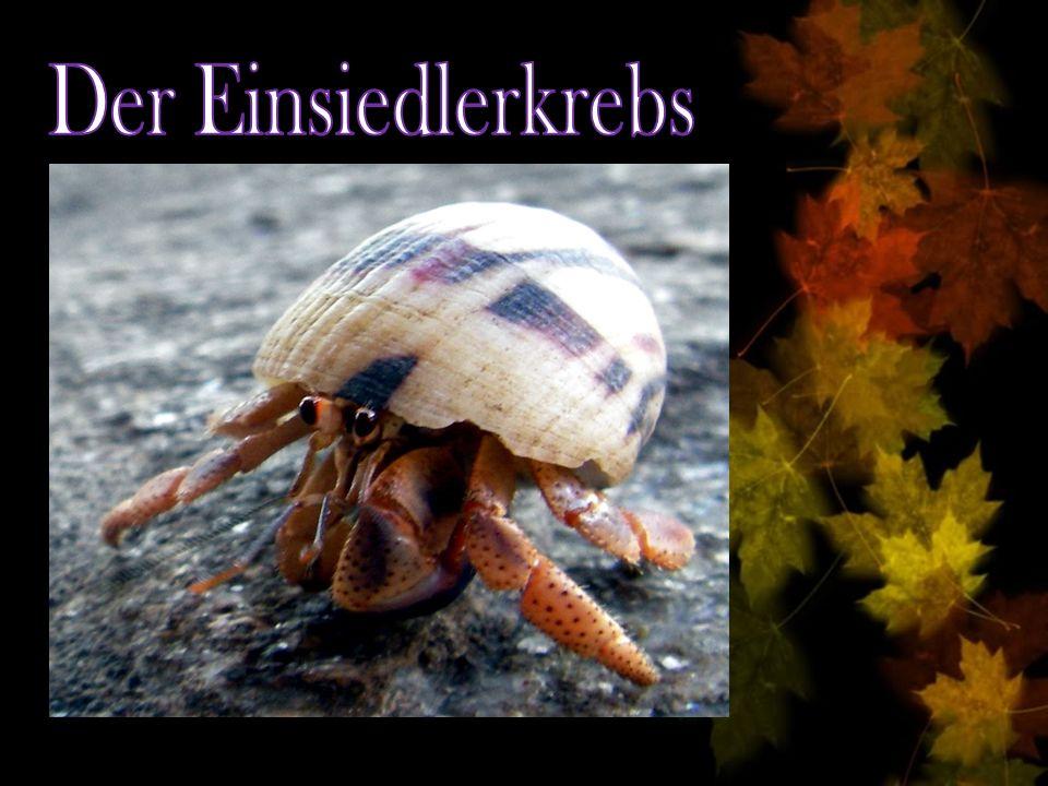 http://www.lerntippsammlung.de/Tarnung-im-Tierreich.html http://de.wikipedia.org/wiki/Tarnung_(Biologe) http://www.medienwerkstatt- online.de/lws_wissen/vorlagen/showcard.php?id=1391&edit=0 http://www.unki.de/schulcd/bio/tarnung.htm http://de.wikipedia.org/wiki/Zitronenfalter Zugriffsdatum: 09.10.2009
