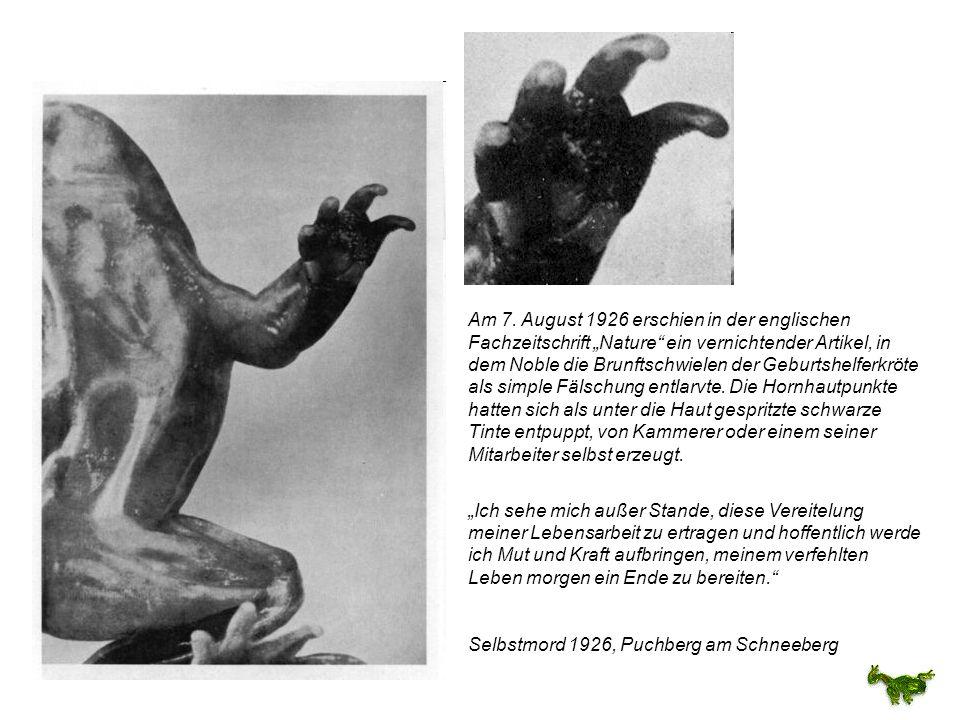 Am 7. August 1926 erschien in der englischen Fachzeitschrift Nature ein vernichtender Artikel, in dem Noble die Brunftschwielen der Geburtshelferkröte