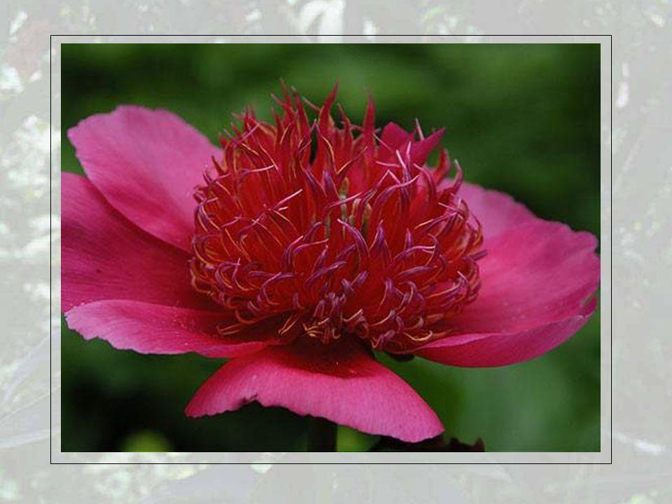 jede Wiese sprosste von Blumen in duftenden Gründen, festlich heiter glänzte der Himmel und farbig die Erde.
