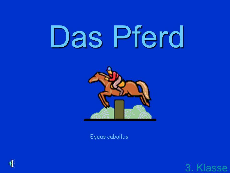 Das Pferd 3. Klasse Equus caballus