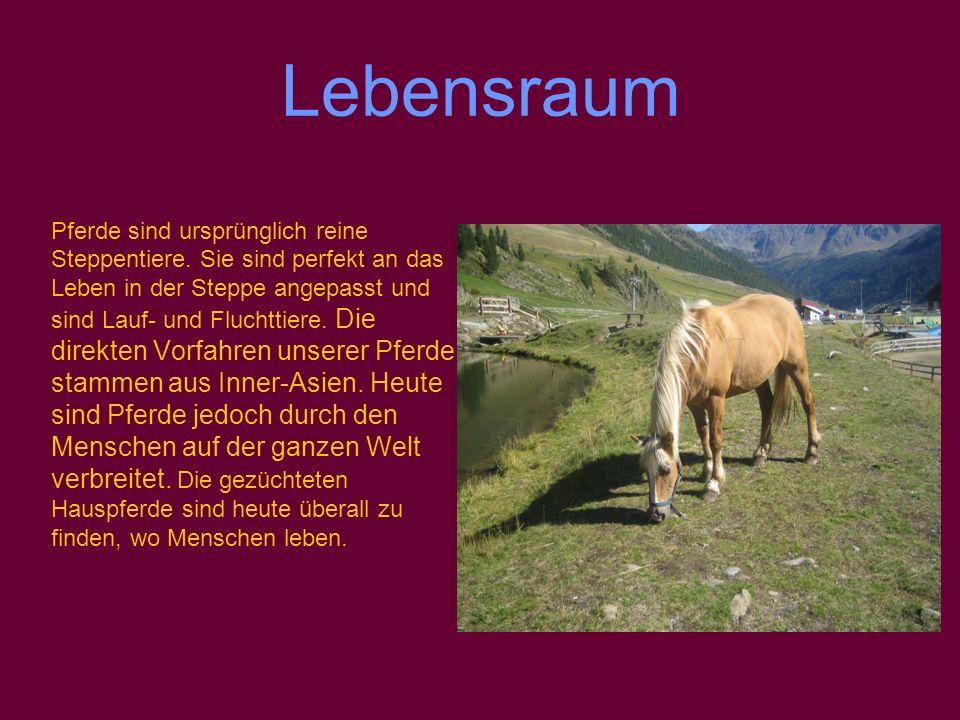 Lebensraum Pferde sind ursprünglich reine Steppentiere.