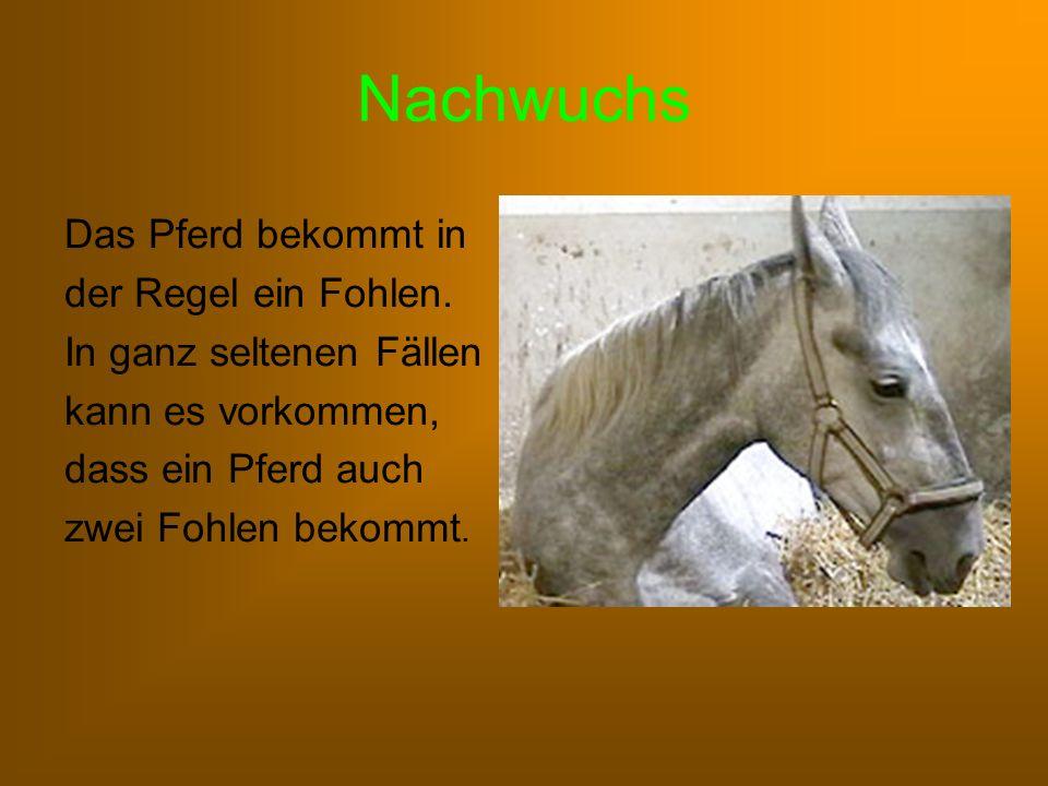 Nachwuchs Das Pferd bekommt in der Regel ein Fohlen.