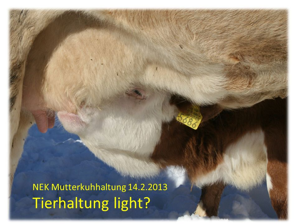 NEK Mutterkuhhaltung 14.2.2013 Tierhaltung light?