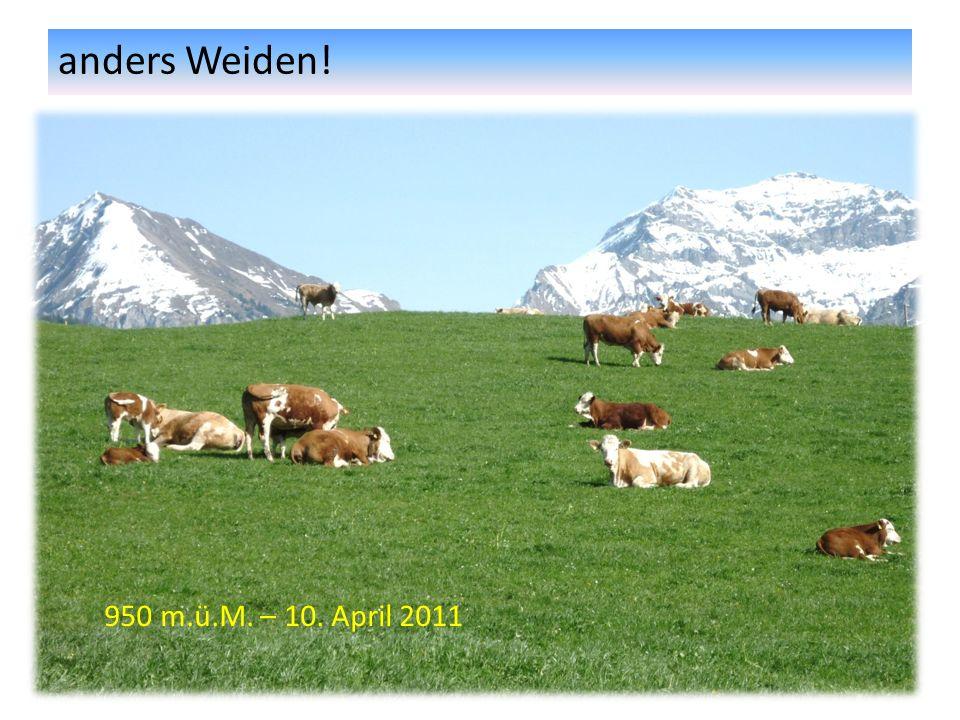 anders Weiden! 950 m.ü.M. – 10. April 2011