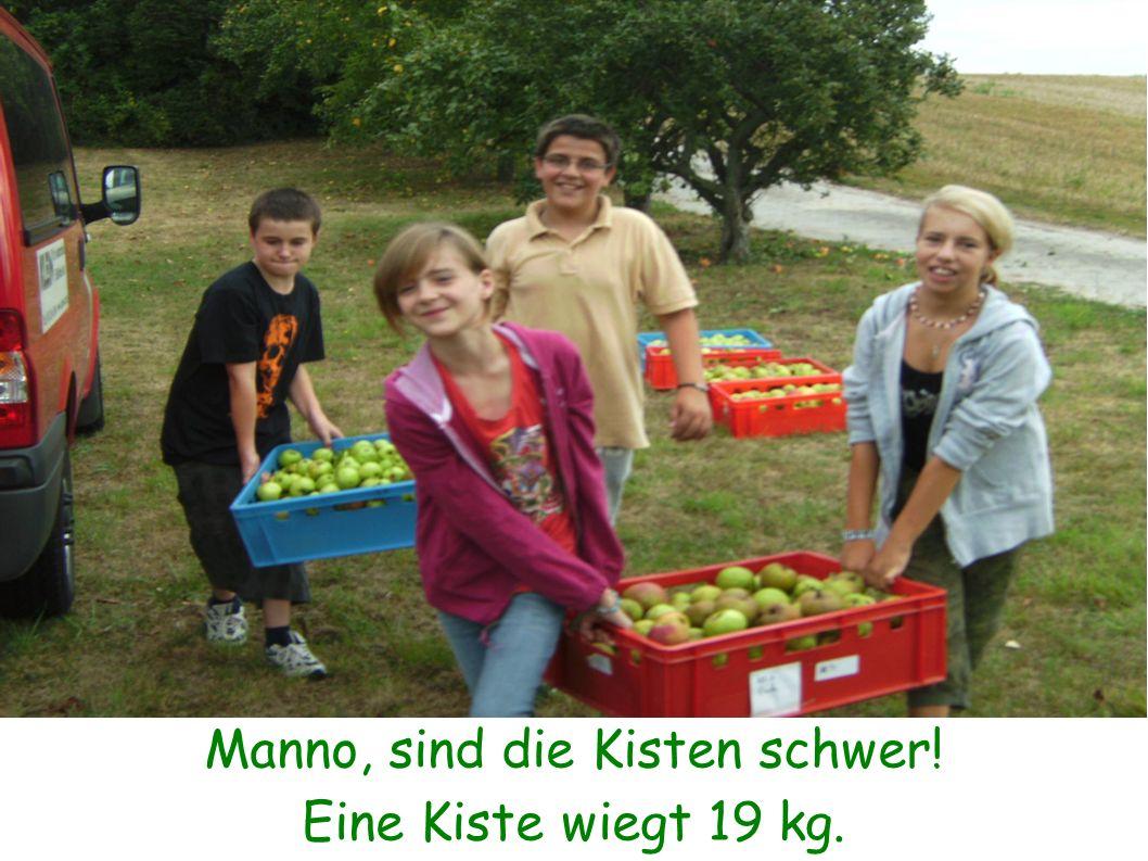 7 Kisten mit Äpfeln, in 70 Minuten von 7 Helfern gepflückt. Wie viele Kisten hat jeder gepflückt ?