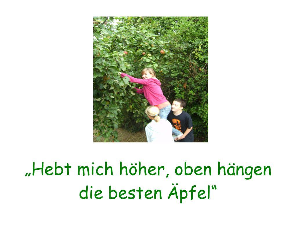 Eine richtige kleine Kelter hilft uns den Saft aus der Apfelmaische zu pressen.